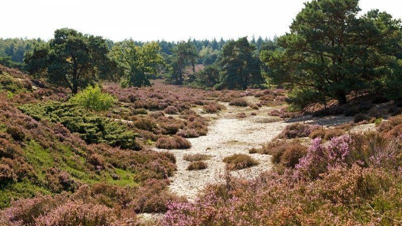 Naturschutzgebiet Holland: die Veluwe