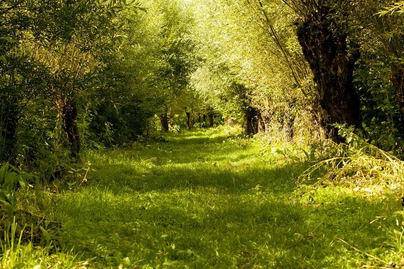 You are currently viewing Naturschutzgebiet Niederlande entdecken?
