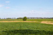Ländlicher Urlaub in der Region Groningen