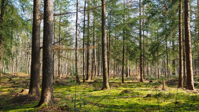 3 Ferienparks in Holland Natur