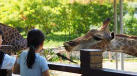 Die 12 besten Zoos in Holland