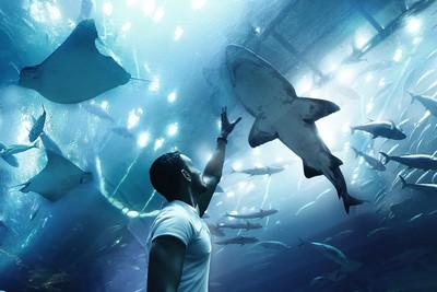 Unterwassertunnel sieht man in vielen der besten Zoos in Holland