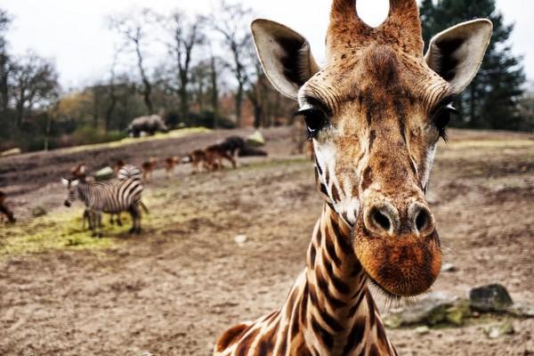 Wildlands Adventure Zoo in Emmen
